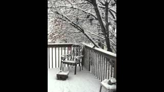 West Hartford (CT) United States  city photos gallery : Snow in West Hartford, Connecticut, USA; February 5, 2016