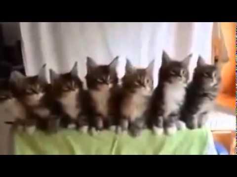 Танцующие котята (video)