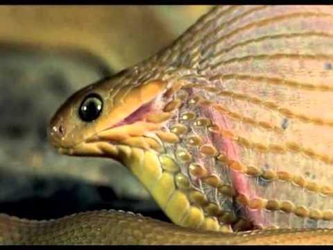 小蛇吞完一枚大蛋後,突然就拚命嘶喊,下一秒竟然發生....