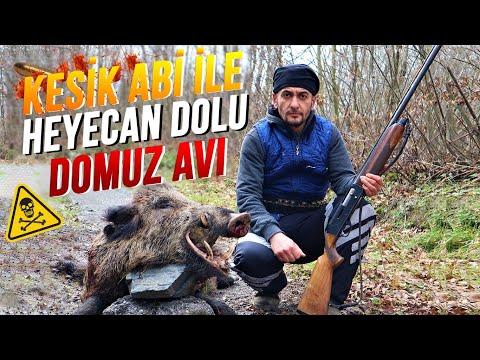 KESİK ABİ İLE HEYECAN DOLU DOMUZ AVI !! (2 DOMUZ AVLADIK) | Wildboar Hunting