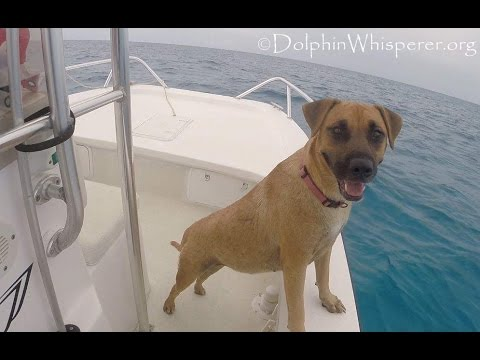 Dog Sees Dolphins For The First Time