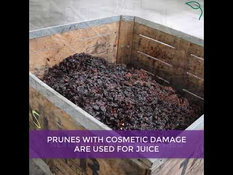 How Prunes Are Made