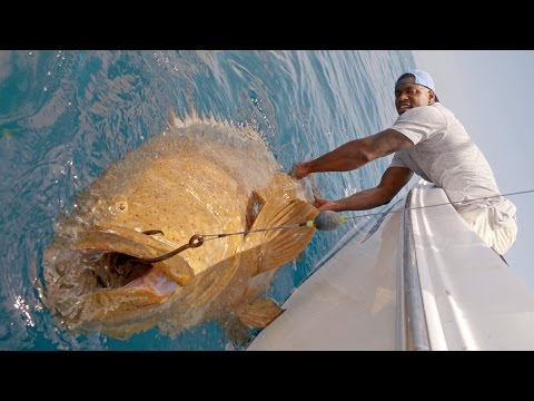 Monster Goliath Groupers with NFL Linebacker Sam Barrington - 4K - Thời lượng: 11:28.