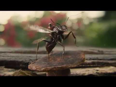 Ant-Man (2015) - Blu-ray menu