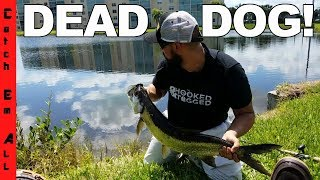 Video FOUND DEAD PET DOG while Fishing an ILLEGAL POND with Saltwater Fish! Before getting kicked out MP3, 3GP, MP4, WEBM, AVI, FLV Oktober 2017