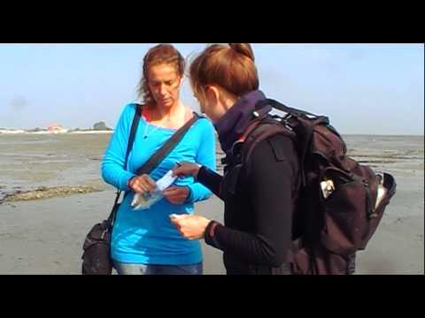 Julia Goldhammer und Dr. Martina Karle über Funde aus dem Watt
