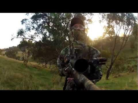 Fox, Cat and Rabbit Hunting - May 2012
