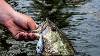Video Catch MORE Fish With this Tip! MP3, 3GP, MP4, WEBM, AVI, FLV Mei 2019