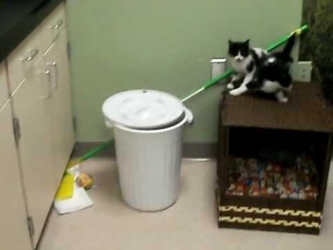 小貓在定中亂跑誤中陷阱!