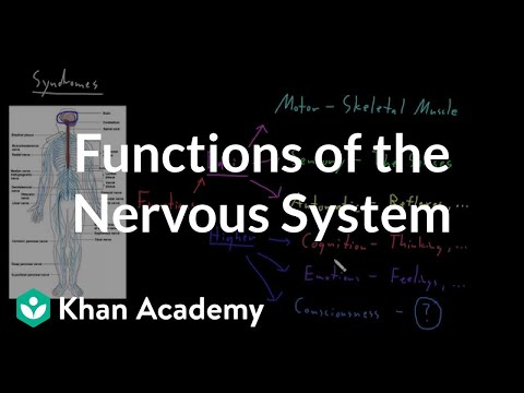 Functions Of The Nervous System Video Khan Academy