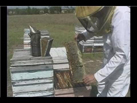 Beekeeping Basics : Beekeeping: Parts of an Active Beehive