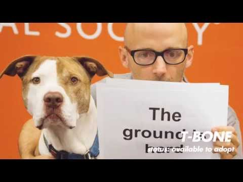 Almost Home (Best Friends Animal Society Lyric Video) - Moby
