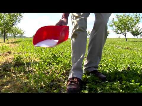 Fertilizing Your Established Fruit Trees