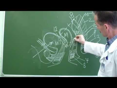 Схема пункции заднего свода влагалища