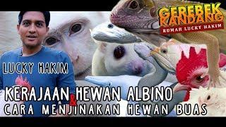 Video Lucky Hakim di Grebek koleksi Hewan Langkanya ! MP3, 3GP, MP4, WEBM, AVI, FLV Agustus 2019