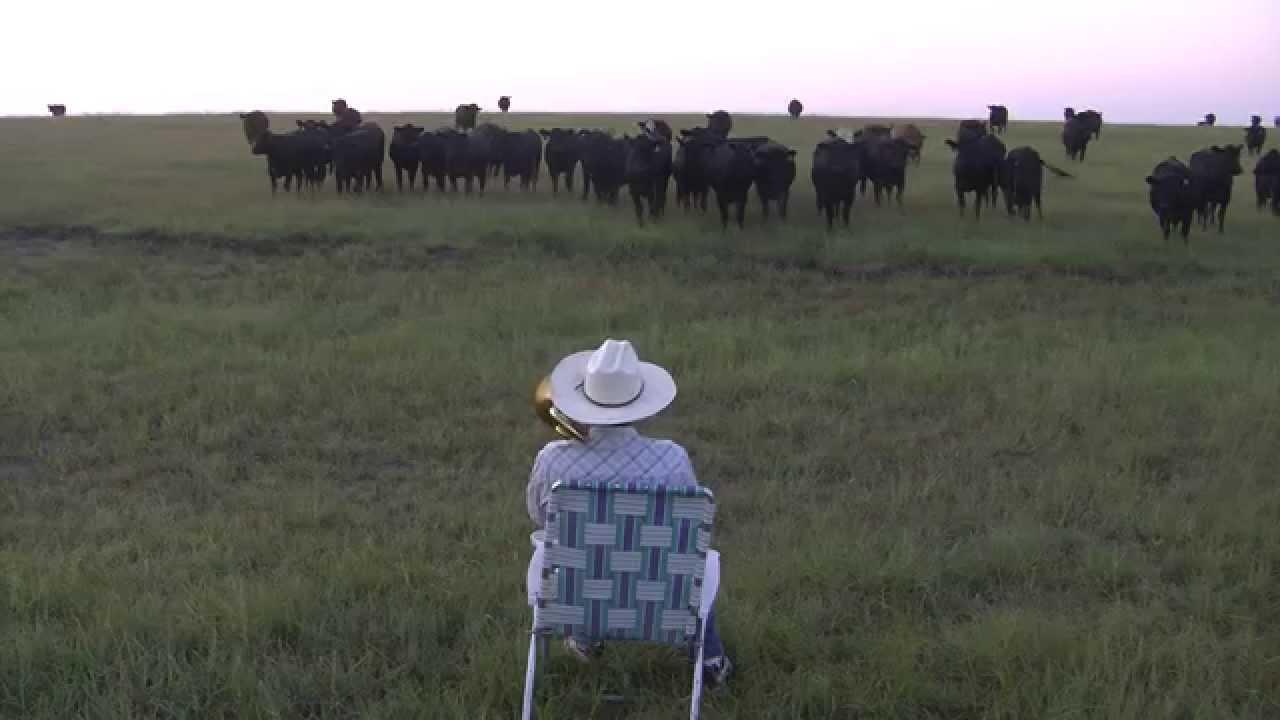 Cows Love Lorde