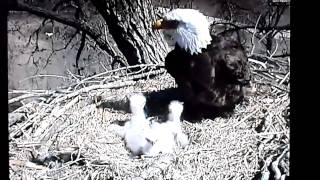 Decorah (IA) United States  city photo : Decorah, Iowa (USA) Eagles - Dad