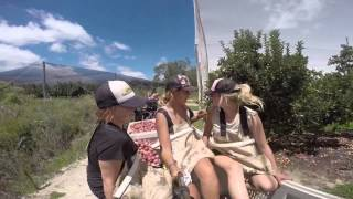 Stanthorpe Australia  city pictures gallery : Farm work australia stanthorpe 2015