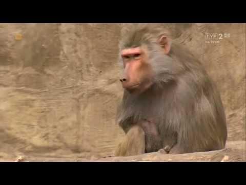 Kacper Ruciński - Dubbing zwierzątek [18]
