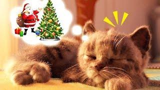 Play Fun Pet Kitten Care Game - Little Kitten Preschool - Kitten Cat Animation Games For kids