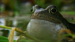 Frog Mating Season On The Shannon   Ireland S Wild River   Nature On Pbs