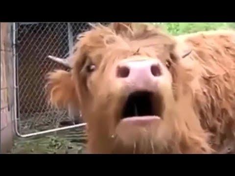Animals With Autotune Compilation