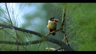 kingfisher(pt.1/3)