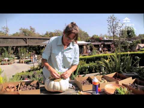 Roger's Gardens | Succulent Topped Pumpkin Workshop