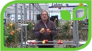 #22 Pflanzt schorfresistente Apfelsorten!