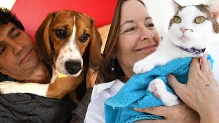 Loving your pets during social distancing by The Humane Society of the United States
