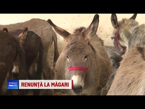 Măgarii dispar din gospodăriile românilor. Ce fac, însă, unii întreprinzători