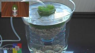 Video DIY Aquarium filter : testing a prototype biofilter / Air Driven Filter # MP3, 3GP, MP4, WEBM, AVI, FLV Februari 2019