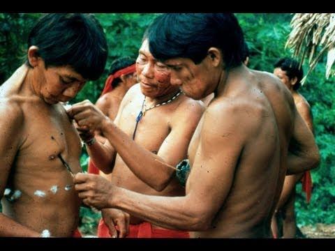 AMAZONIA: LAST CALL