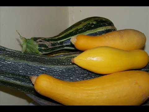 How To Grow -Squash