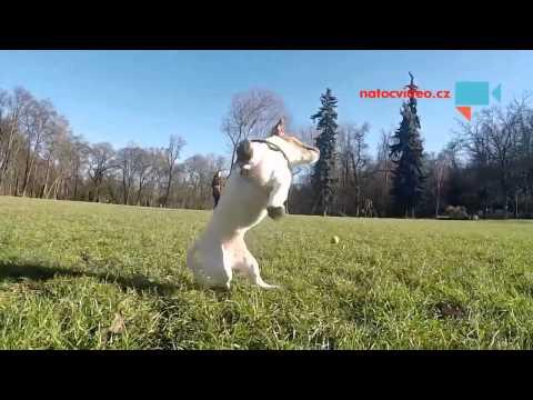 Psi slow mo vyvadeni ve Stromovce