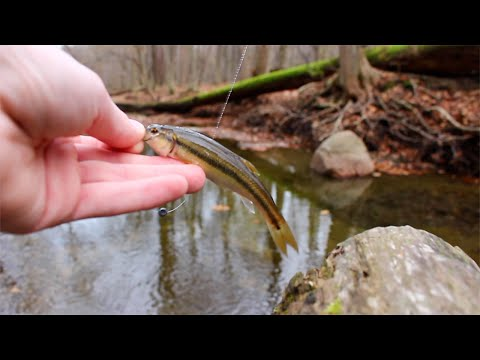 Small Creek Chub Fishing | Ohio Streams | Canon Rebel SL1 (видео)