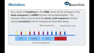 Essentials Video Animation - Mutation