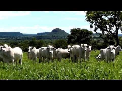 FOTOS DE �GUIA FOCO MG. EM GUIMARÂNIA-MG - E OUTRAS FOTOS FEITAS POR GERALDO SATURNO