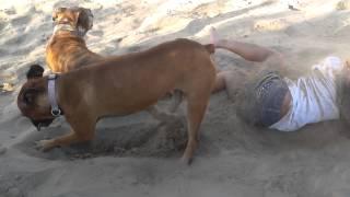 Mała dziewczynka zaczęła kopać psa na plaży. Po chwili bardzo tego pożałowała.