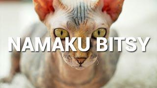 Video NAMAKU BITSY MP3, 3GP, MP4, WEBM, AVI, FLV Oktober 2017