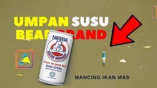 Download Video SUKSES..!! Mancing Ikan Mas Djempol pandan Wangi + Susu Bear Brand #CARP FISHING MP3 3GP MP4
