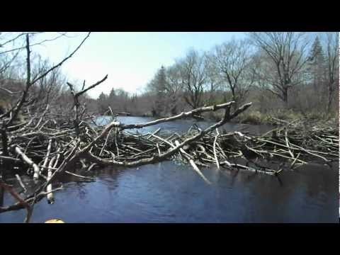 Beaver Dam on Meteghan River, Nova Scotia