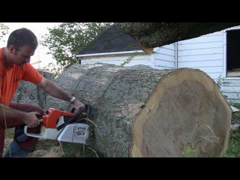Stihl MS880 In Big Oak
