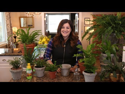 Houseplant Fern Care Guide! 🌿💚// Garden Answer