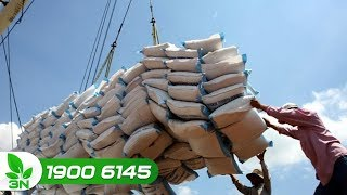Nông nghiệp | Xuất khẩu gạo Việt Nam những tháng tới rất khó khăn