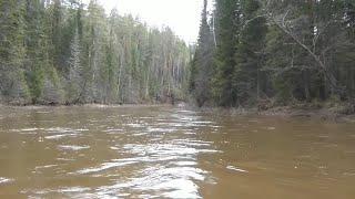 Рыбалка на хариуса с 9 июня по 19 июня 2013 года