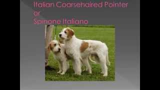 Dog breed name cross reference part 6 I, J