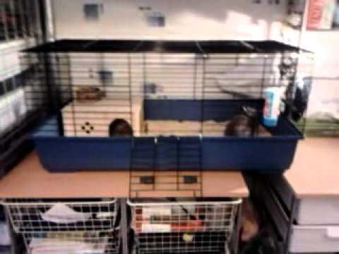 Comment construire une cage a lapin nain la r ponse est for Construire une cage a lapin exterieur
