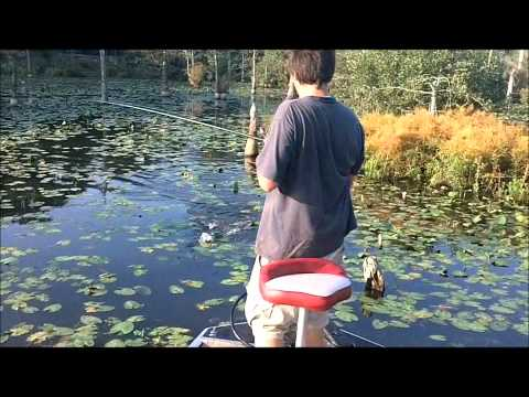Bass fishing Delaware 8/8/11 w/ frogs and buzzbaits