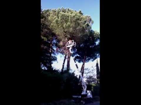 Potatura alberi in giardino privato - Monte Porzio Catone (RM), Novembre 2011